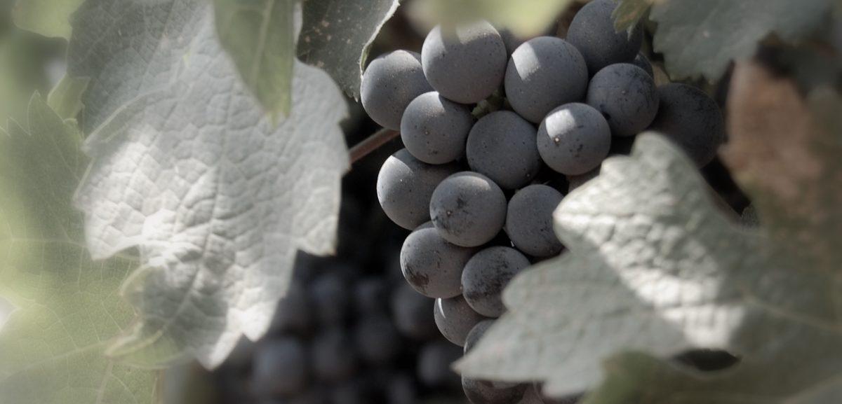 טעימות יין בצפון